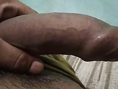 Indian fast panhandler
